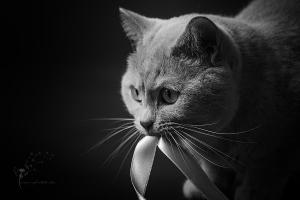 Katzenfotograf Gütersloh