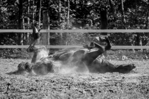 Pferdefotografie Gütersloh - mexi-photos