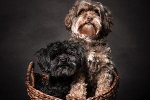 Hundefotograf Gütersloh