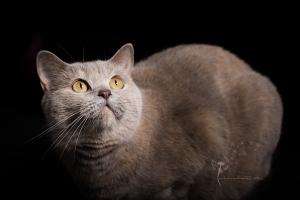 Tierfotografie Gütersloh - Astrid Carnin - mexi-photos