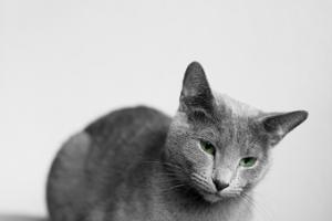 Tierfotografin Gütersloh - Astrid Carnin - mexi-photos