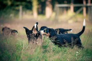 Tierfotografie - Gütersloh - mexi-photos