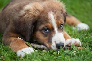 Schau mir in die Augen kleines - Tierfotografie Astrid Carnin