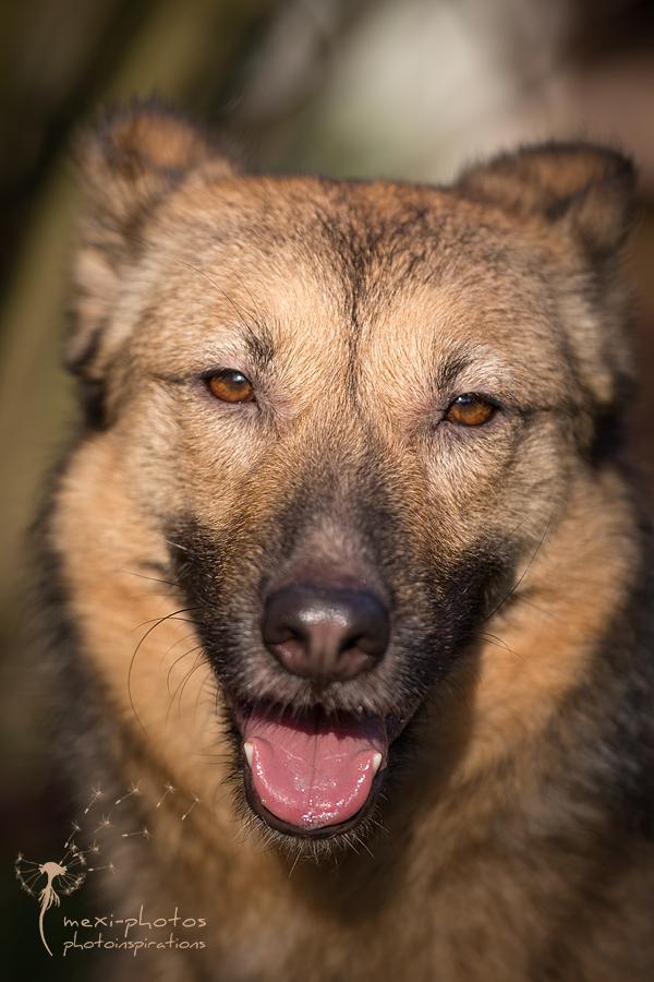 Hundefotografie Gütersloh