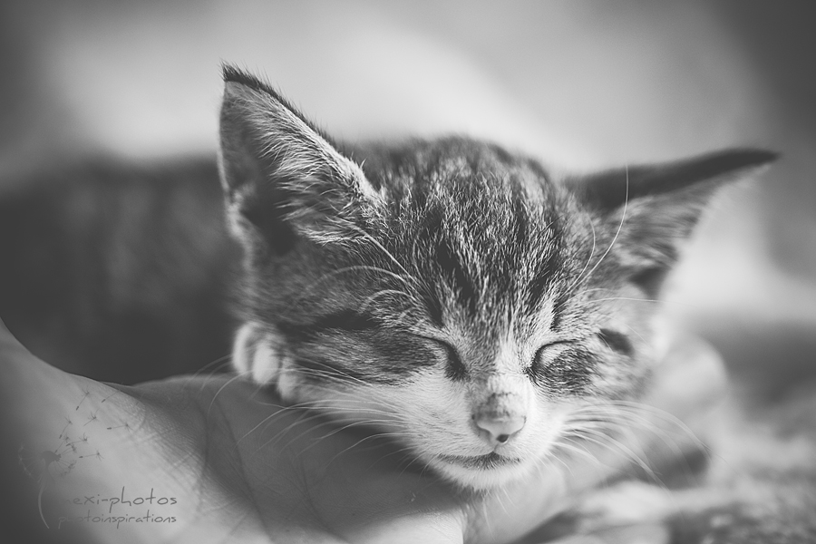 babykatze_mexi-photos_IMG-8905