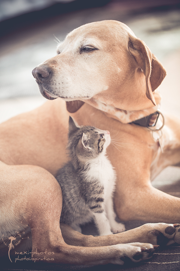 cat_and_dog_IMG-8846