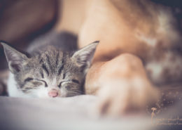 sleeping_little_cat_mexi-photos_IMG-8887
